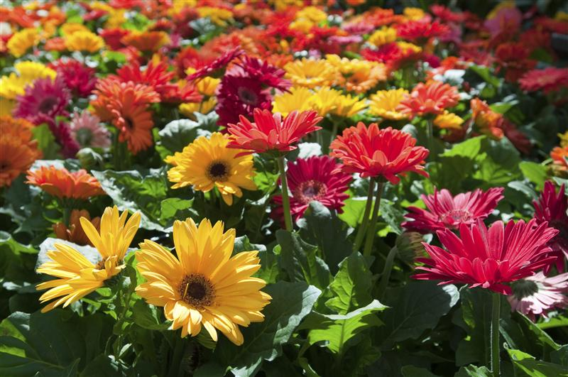 Learn how to brighten your garden with flowers. Flowers