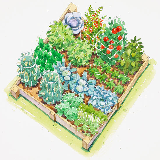 Garden Plan: Companion Planting